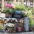 Chatsworth Flower Show