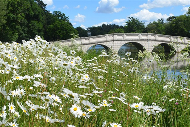 A bridge over a river with the banks covered in daisys at Painshill Park
