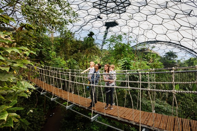 A Canopy Rope Bridge in the Eden Project