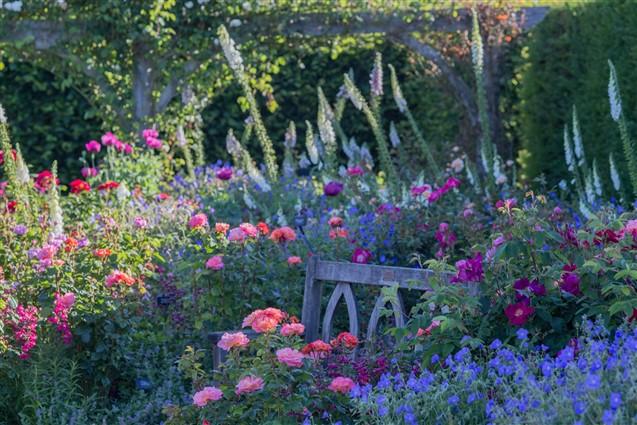 Bench in the RHS Rosemoor Gardens