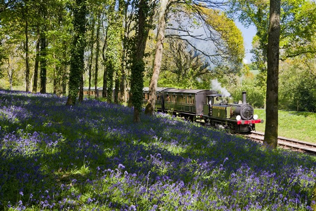 Steam train travelling through a wood filled with Bluebells on the Isle of Wight Steam Railway