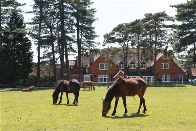 New Forest Ponies Outside Beaulieu Hotel