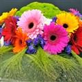 Harrogate Spring Flower Show 2021