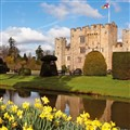Hever Castle & Gardens - Dazzling Daffodils