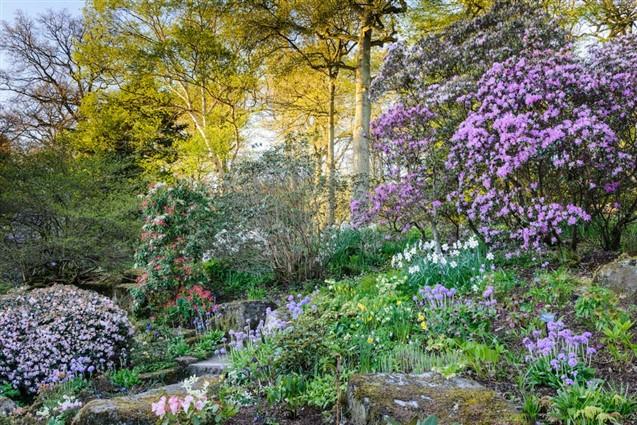 RHS Harlow Carr Flower Borders